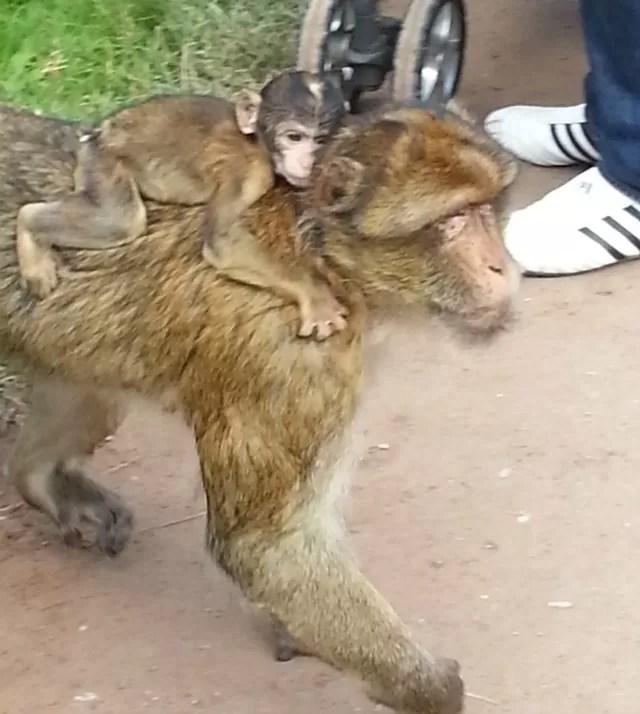 monkey forest near monkeys