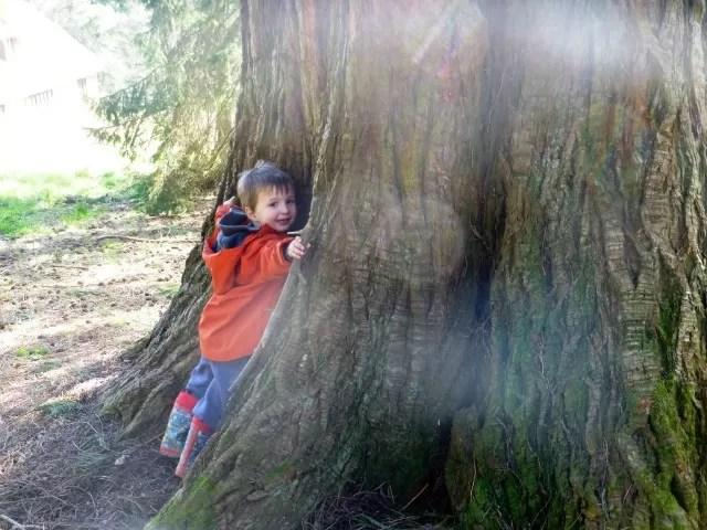 tree hugging