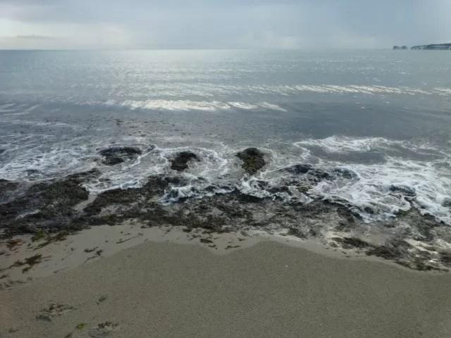 seaweed and the sea