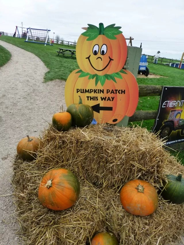 pumpkin patch directions
