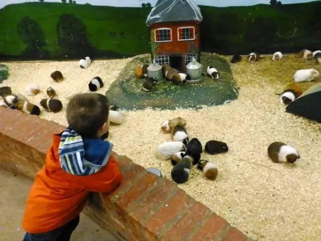 guinea pig village at hatton adventure world