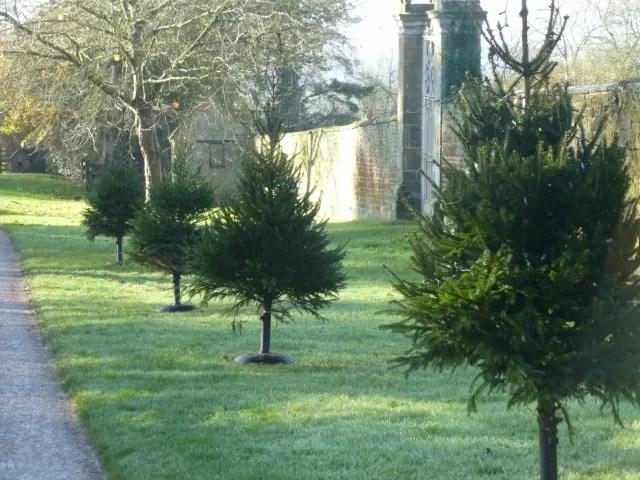 christmas trees at canons ashby
