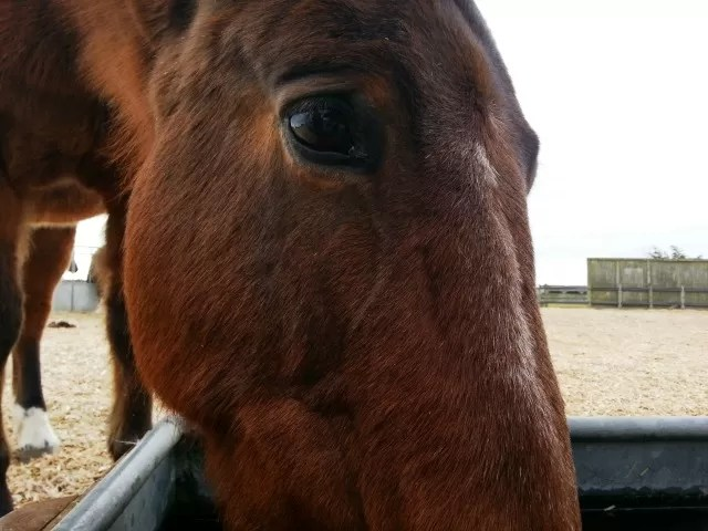 horse's eye - Redwing Horse sanctuary