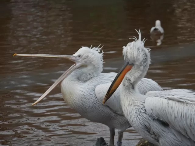 the wetland birds at Paignton Zoo