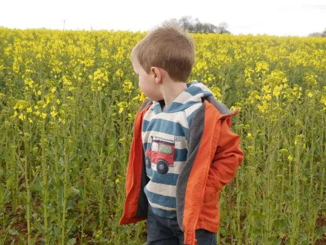 checking out the field crops