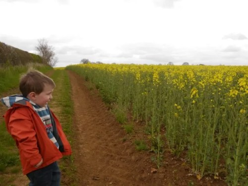 crop fields - rape seed and out for a walk