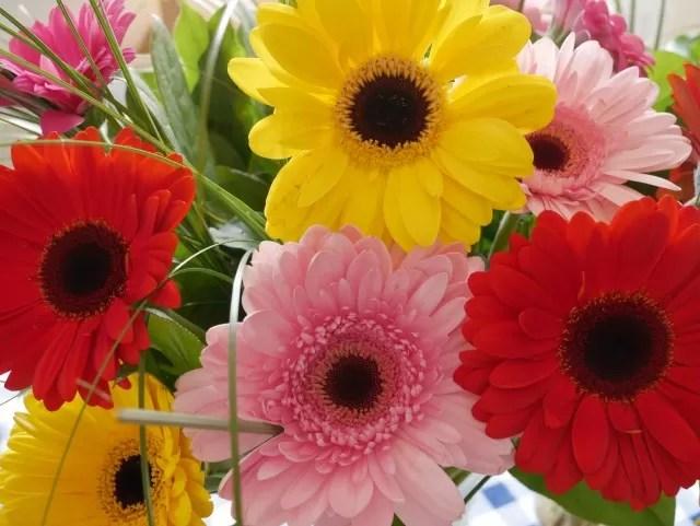 gerberas from Serenata Flowers