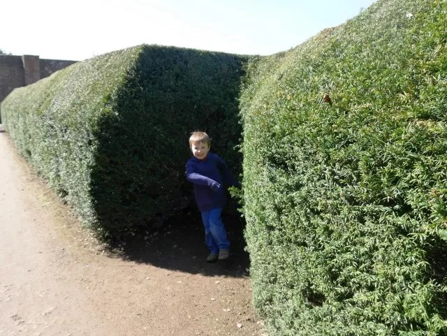 hiding in the maze at Blenheim