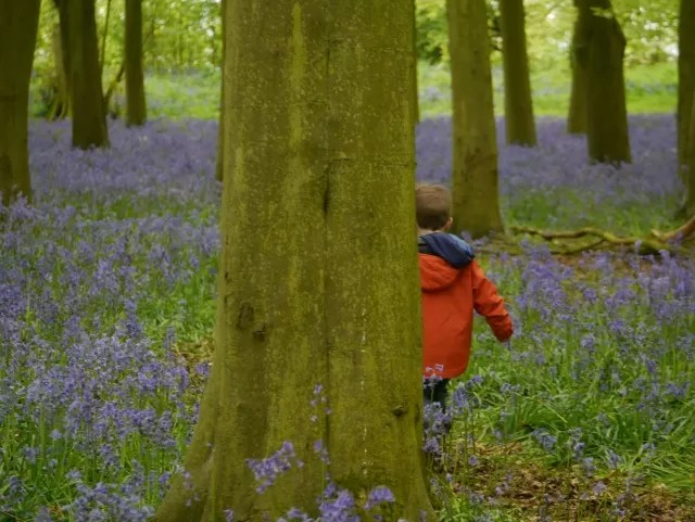 hiding in the bluebells