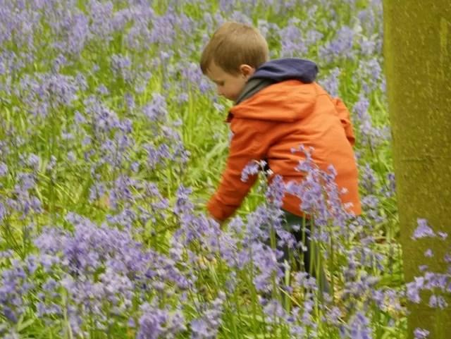 smelling bluebells