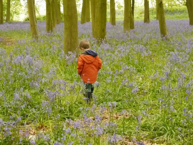 walking in bluebell woods