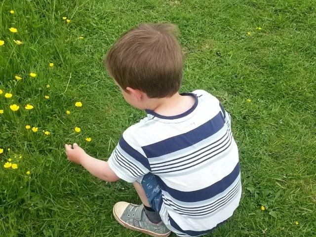 picking buttercups