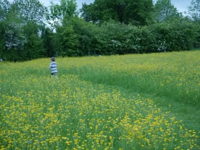 running in the wildflower meadow