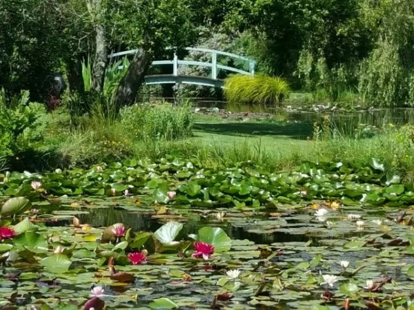 Monet Bridge at Bennetts Water Gardens Weymouth
