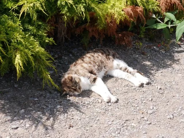 cat asleep in the sun