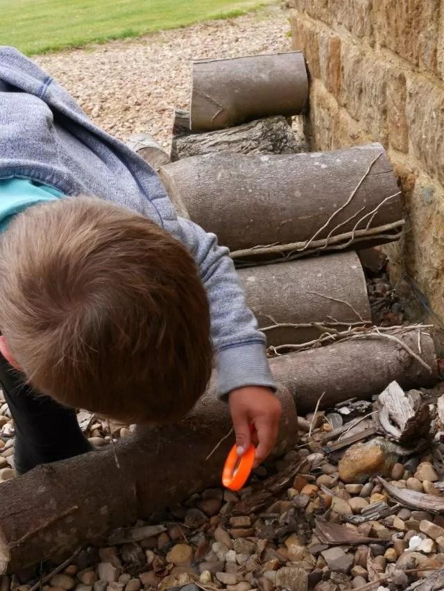 bug hunting under logs