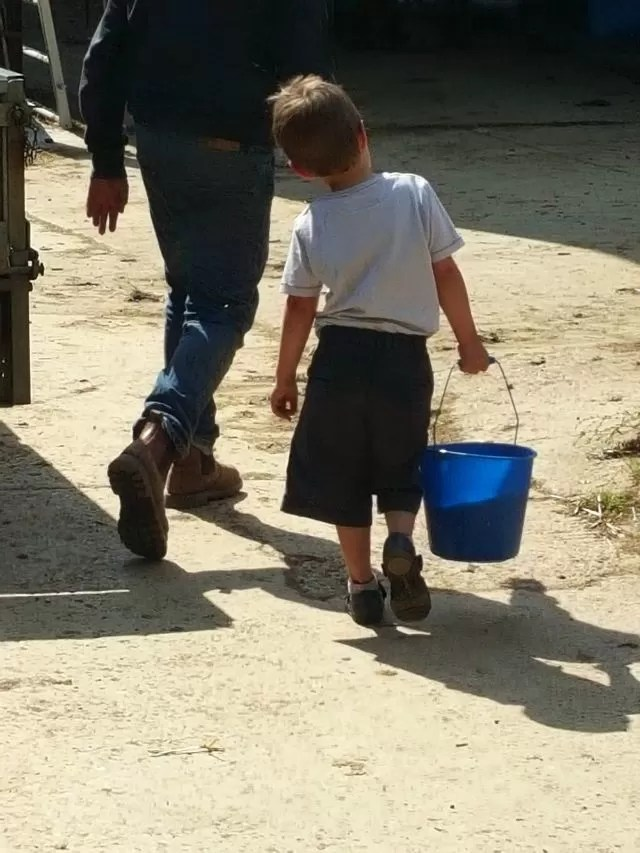 carrying the milk bucket to feed the calf