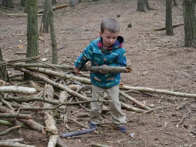 pulling branches out for a den