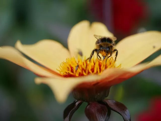 wasp on a yellow flower
