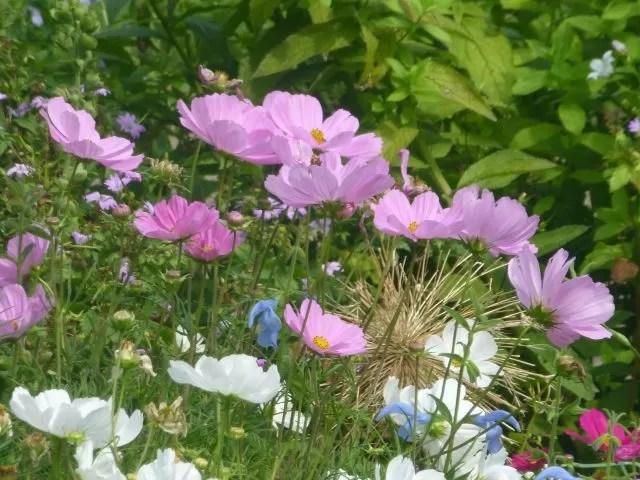 wildflowers in St James Park London