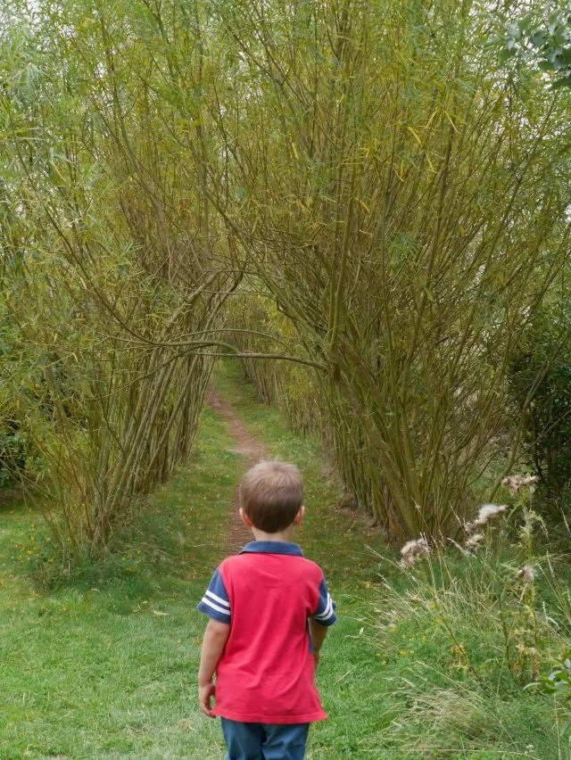 willow tunnel at butterfly world project