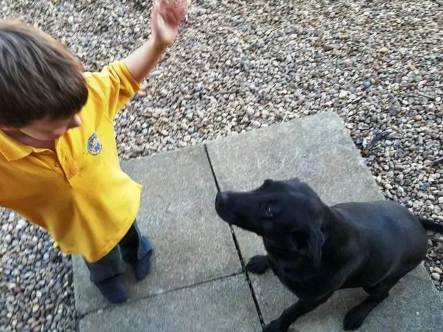 dog whisperer training