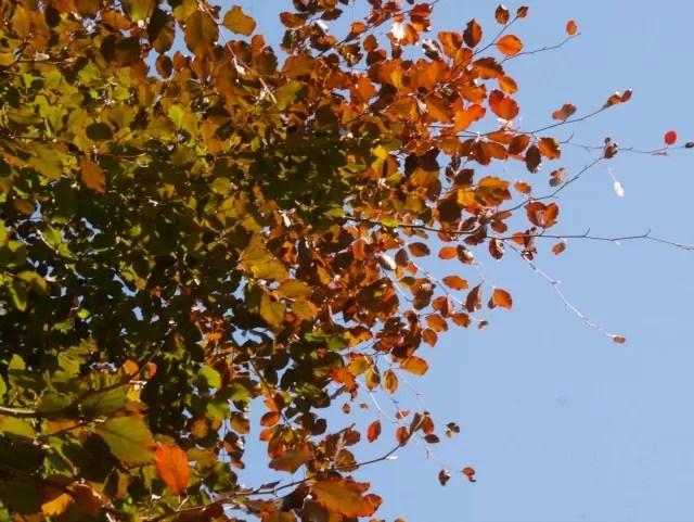 traffic light autumn leaf colours