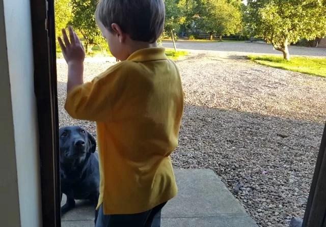 training his black labrador