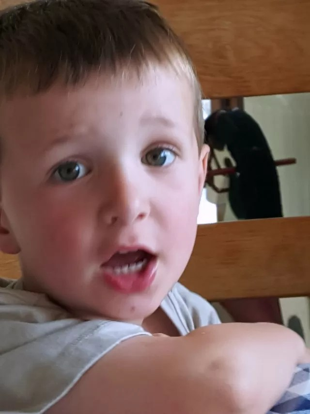 questions on kissing from a 4 year old