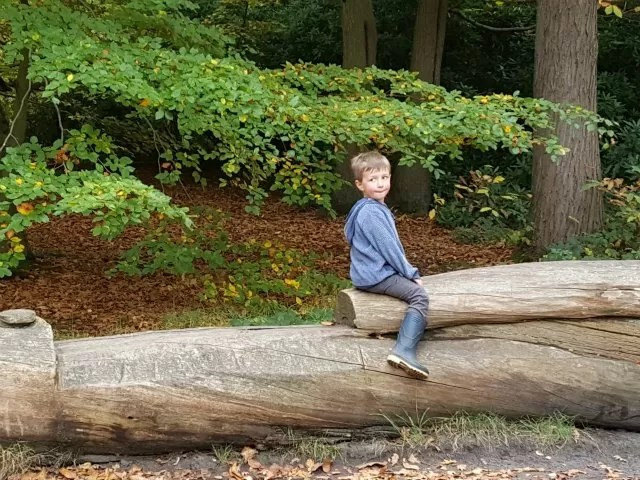 riding a horse log - Virginia water