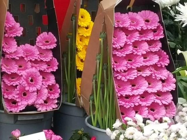 gerberas on the flower stall