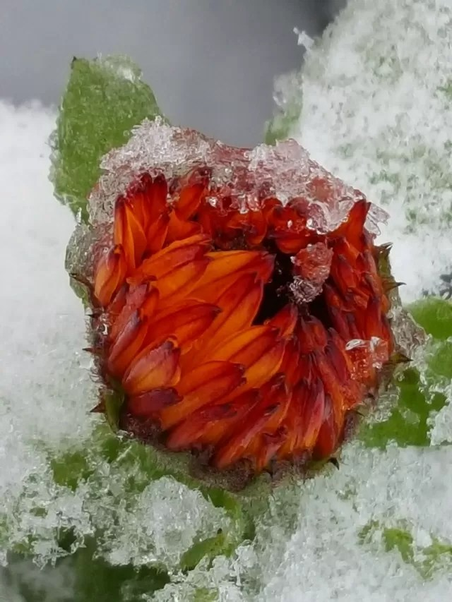 wildflower in snow