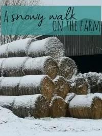 snowy walk round the farm
