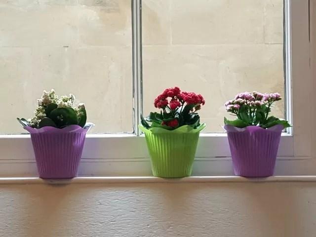 flower pots in the Ashmolean cafe
