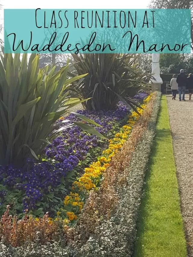 pansies in the flower beds at Waddesdon Manor