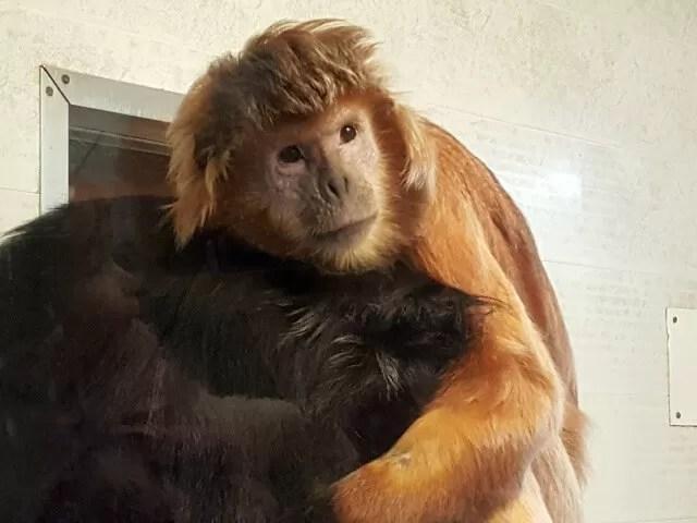 monkey hus