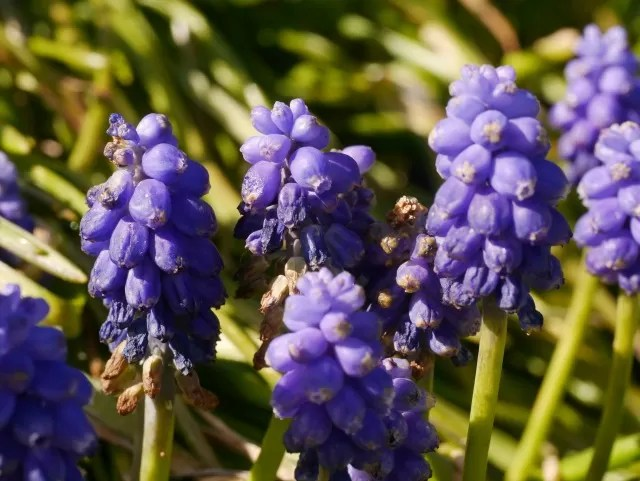 blue flowers in Eastbourne