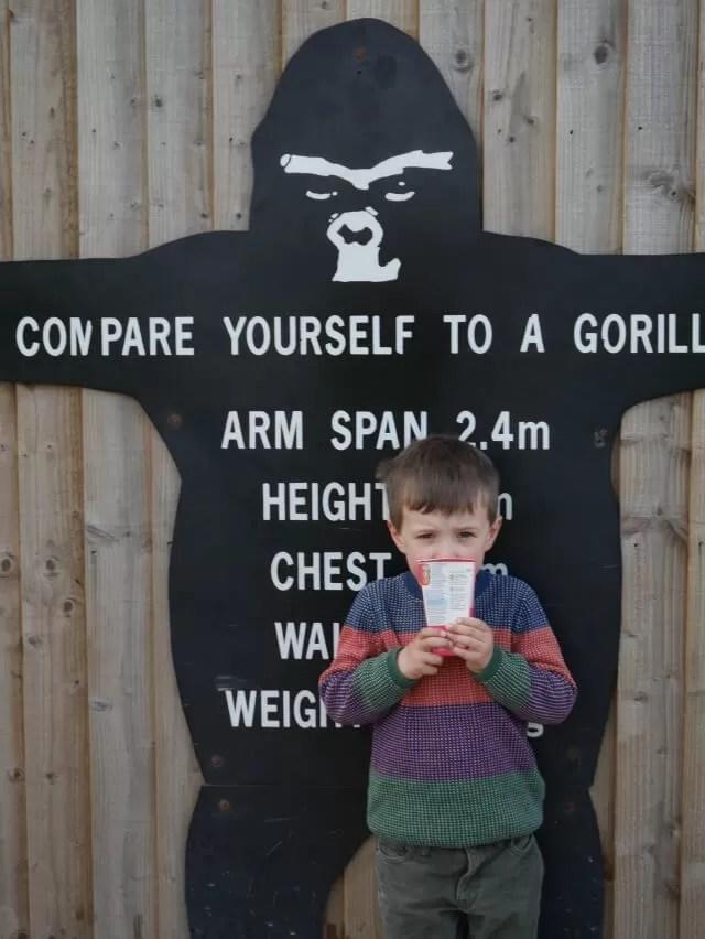compare yourself to a gorilla picture