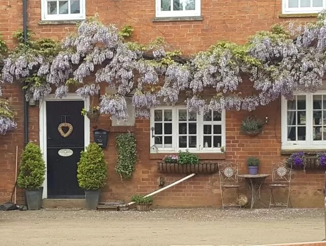 wisteria outside farm cottages