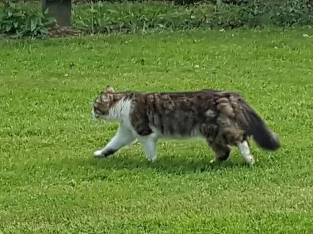 cat on the roam