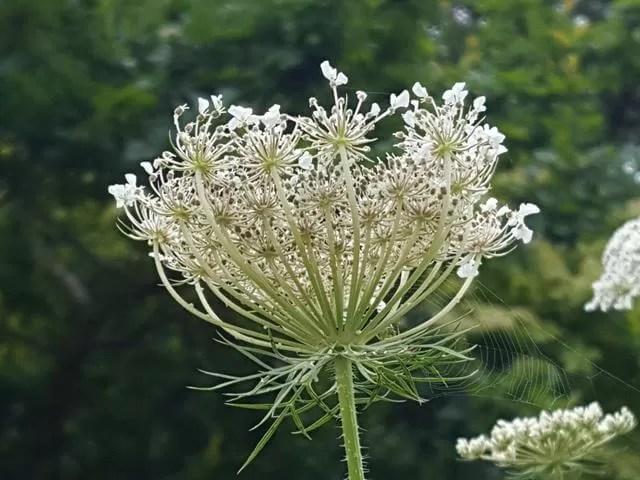 prety white flower