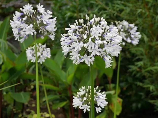 flowers-in-the-walled-garden