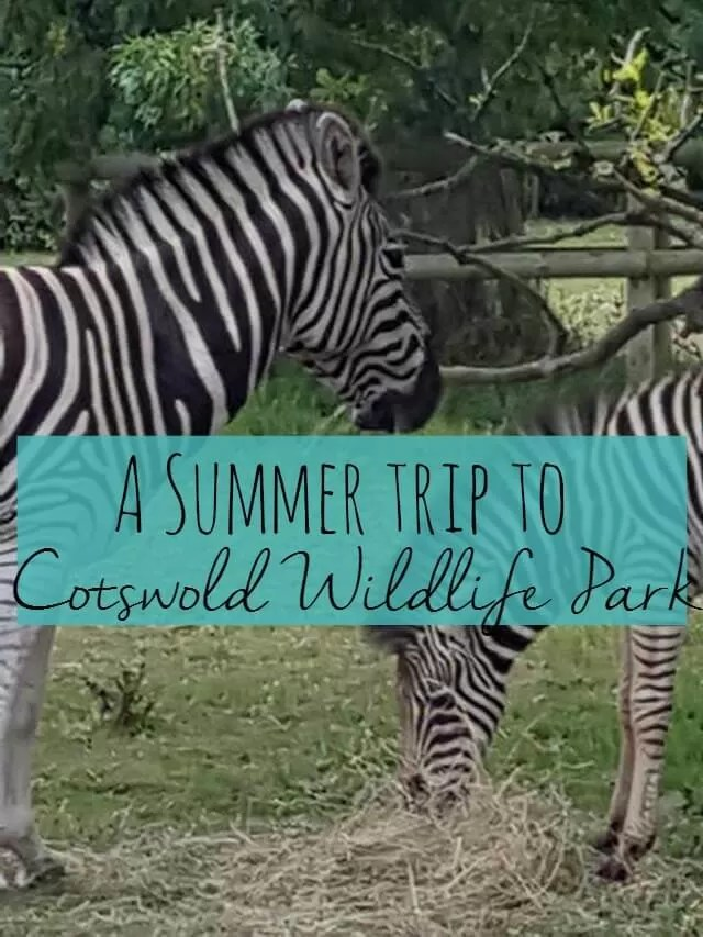 summer-trip-to-cotswold-wildlife-park-bubbablue-and-me