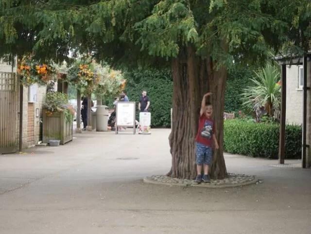 tree-sizing