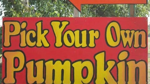 newbie-tips to pick your own pumpkin and a trip to millets farm centre bubbablue and me
