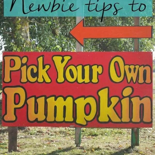 How to pick pumpkins and Millets Farm Centre visit