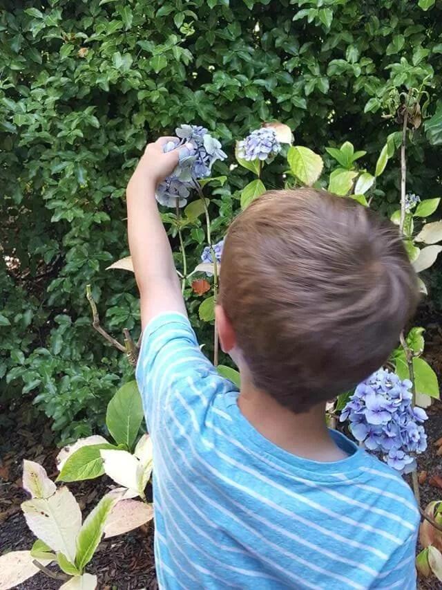 admiring-hydrangeas