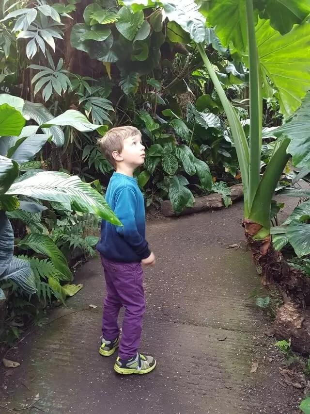 walking-through-living-rainforest