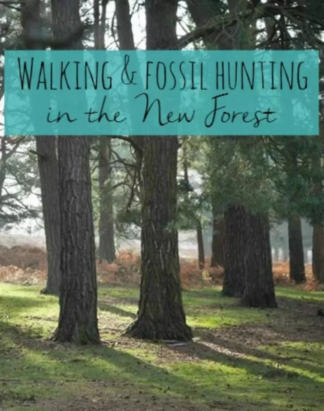 Walk and fossil hunting in the New Forest - Bubbablueandme.