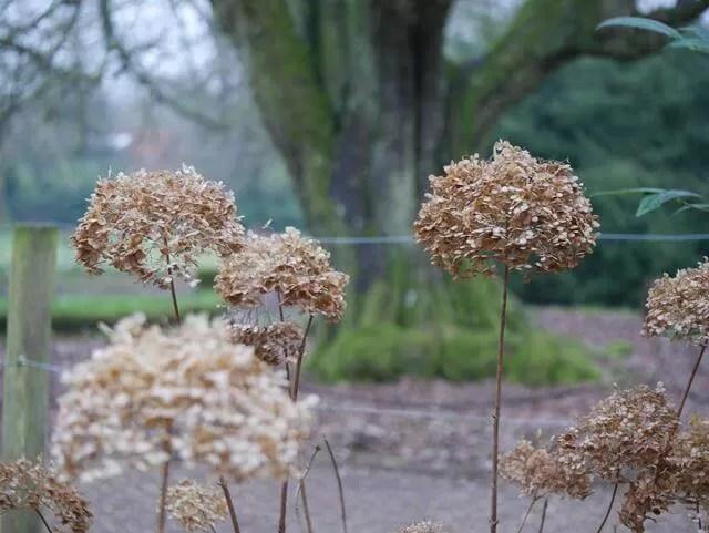 dead flowers at Mottisfont